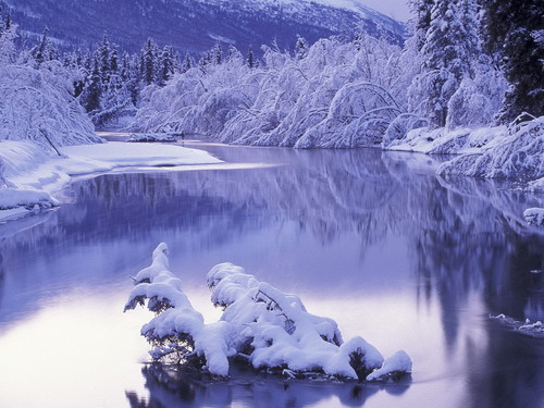 snow fond d'écran entitled Snow in Winter