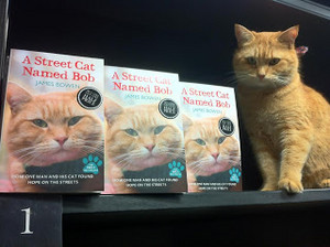 Bob, The سٹریٹ, گلی Cat
