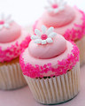 गुलाबी Gourmet कपकेक