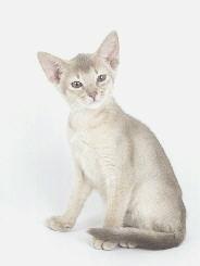Silverpaw - tomcat