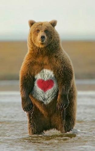 Dreamtime 바탕화면 entitled care 곰 LOL