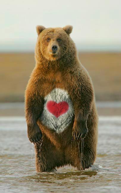 care 곰 LOL