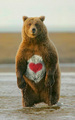 care orso lol