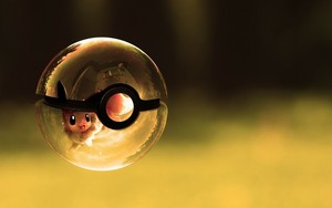 inside the poke ball