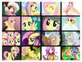 Fluttershy Collage - fluttershy fan art