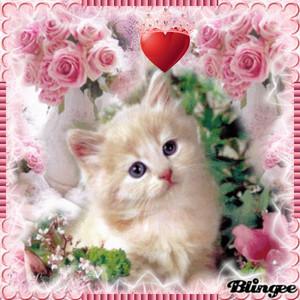 爱情 CAT