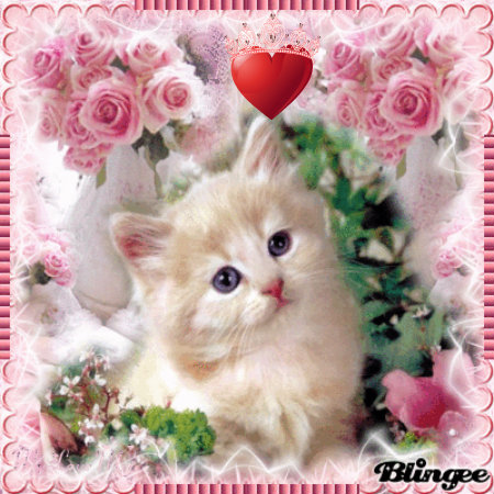 Kittens wallpaper possibly with a persian cat entitled LOVE CAT
