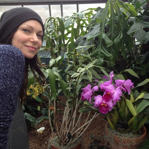 Laura Prepon پیپر وال with a conservatory, a banana, and a مکئی entitled twitter - Instagram تصاویر