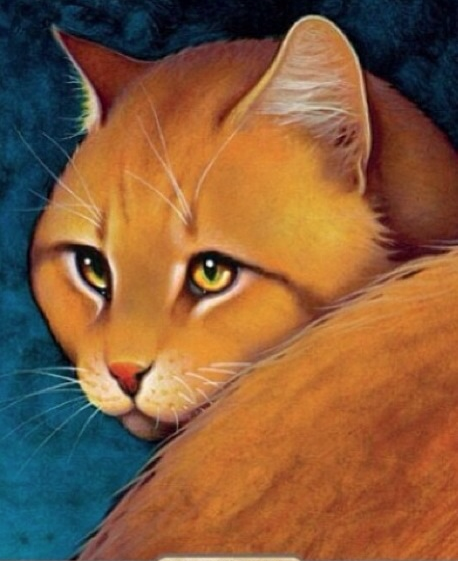 Warriors Erin Hunter Wallpaper: Lionblaze Images Lionblaze's Picture From The Ultimate