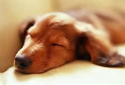 Shhhhhh!!! I'm Sleeping!!!!!!!