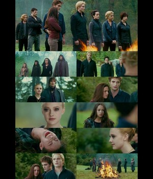 The Cullens, Bella and the Volturi