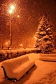 snowy winter - winter photo