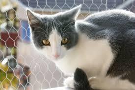 cute cute cat