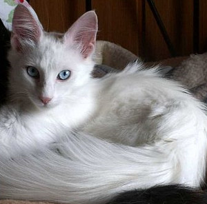 Feather (Luna's sister)