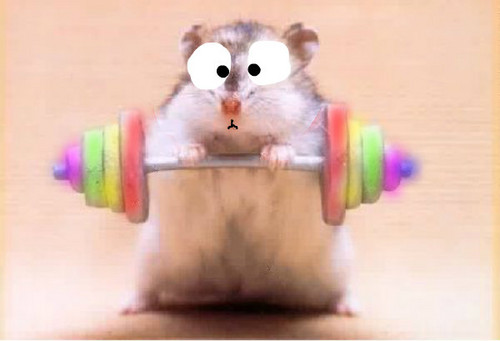 Hamsters wallpaper containing a dumbbell entitled meme