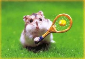 hamster sports