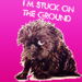 Brussels Griffon - all-small-dogs icon