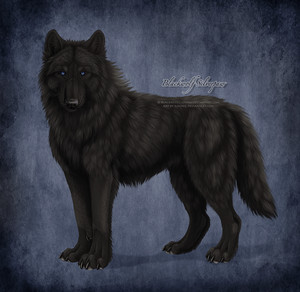 Awesome wolf!