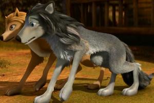 2 Amazing Mbwa mwitu loups