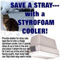 Save a stray with a ... - animal-rights photo