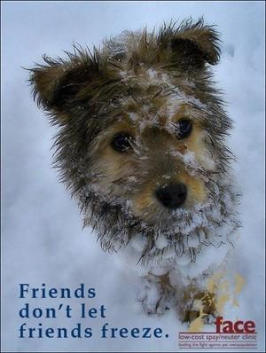 Friends don't let Friends freeze.