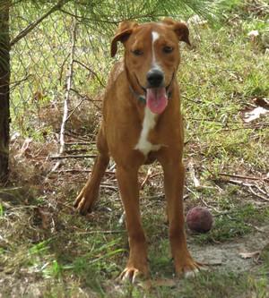 Aldo a shelter dog