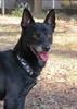 Tod a shelter dog