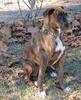 Kay Kay a shelter dog