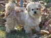 Stevie a shelter dog