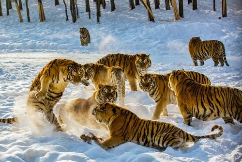 """Asura """"The Crimson"""" Jiin Animals-image-animals-36427888-500-334"""