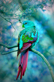 Parrot            - animals photo
