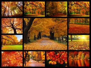 Autumn l'amour