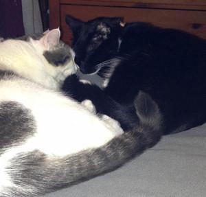 Two mèo Cuddling