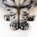 Cat's Legs