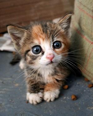 A Cute Little Kitten