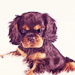 Cavalier King Charles Spaniel - dogs icon