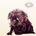 Brussels Griffon - dogs icon