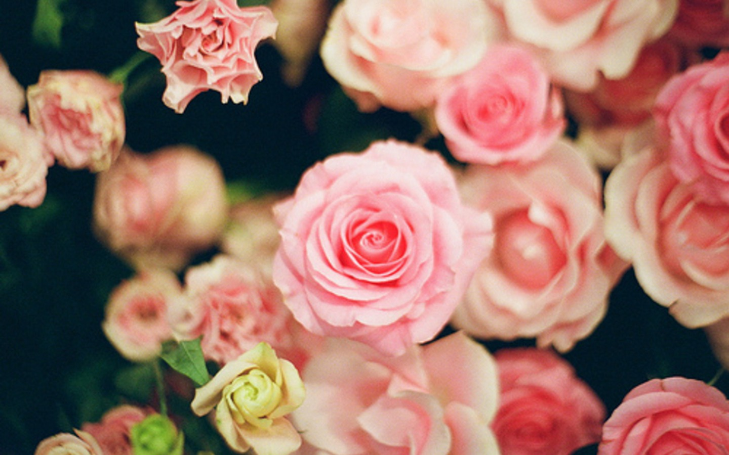 Roses Flowers Wallpaper Fanpop