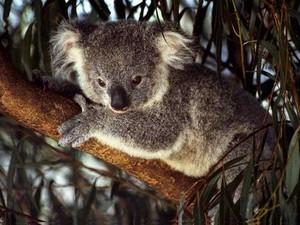 Happy Australia Tag