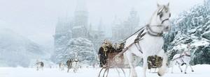 HP4 Snow..