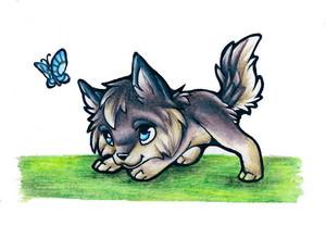 A cute 늑대 pup.
