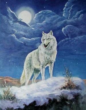 White волк