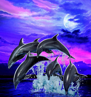 Moonlight Dolphins