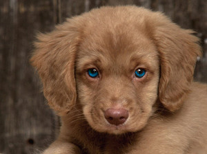 Blue eyed puppy!