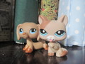 Bronze and Sierra - littlest-pet-shop photo