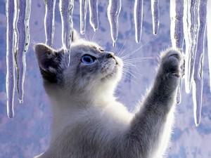 chat et glace