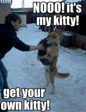 No! It's my kitty :')
