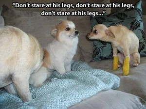 O-O must....not....stare.....
