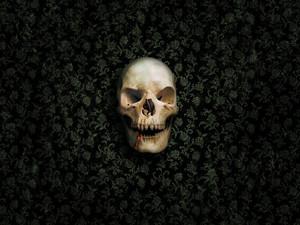 Skull fondo de pantalla