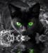 Hollyleaf's Regret - warrior-cats icon